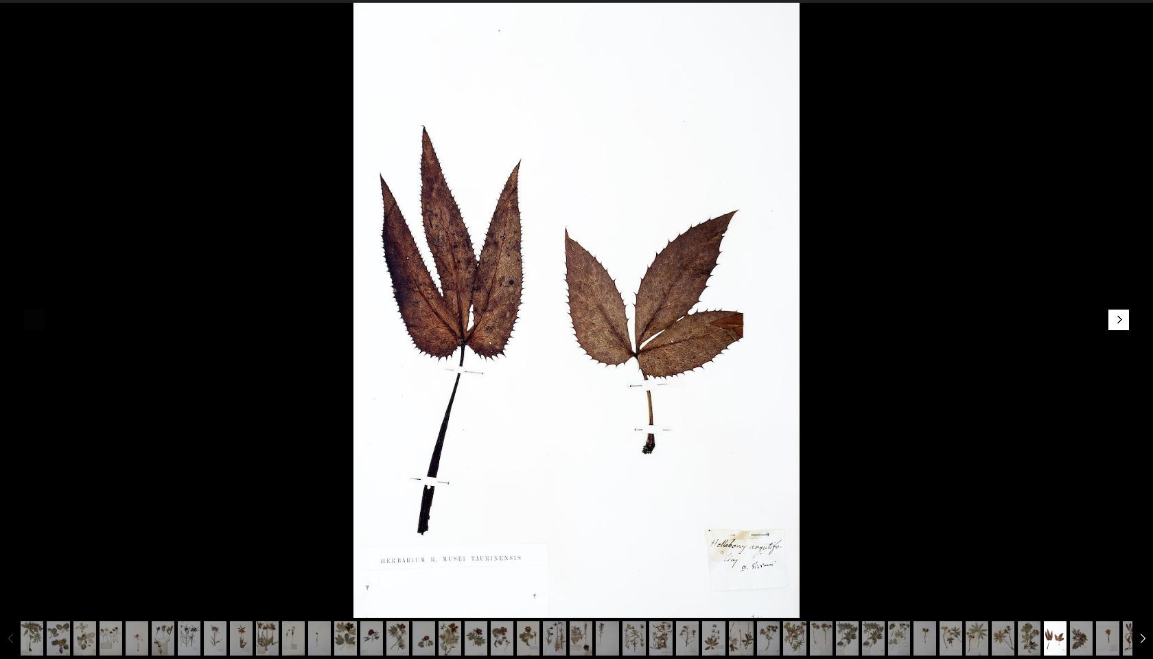 herbarium Turin